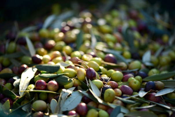 Why Is Olive Oil A Healthy Food?
