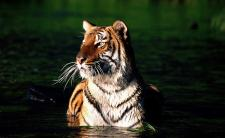 On the Trail of Bengal Tigers on Tiger Tours