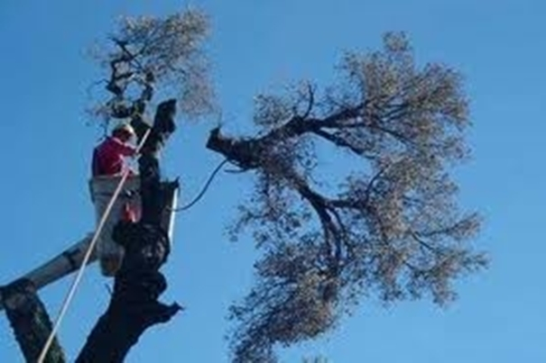 Tree Pruning: What's the Point?